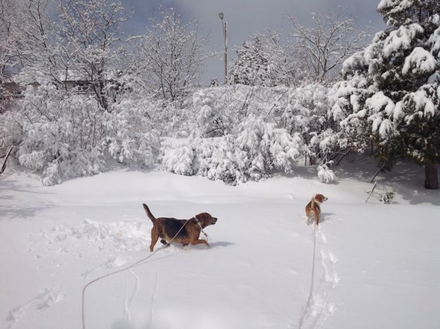 Rose and Kleo enjoying the snow, April 7/2014